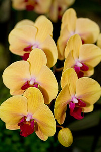 SF_Orchid_Show-23.jpg
