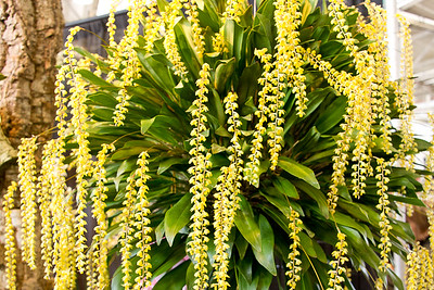 SF_Orchid_Show-13.jpg