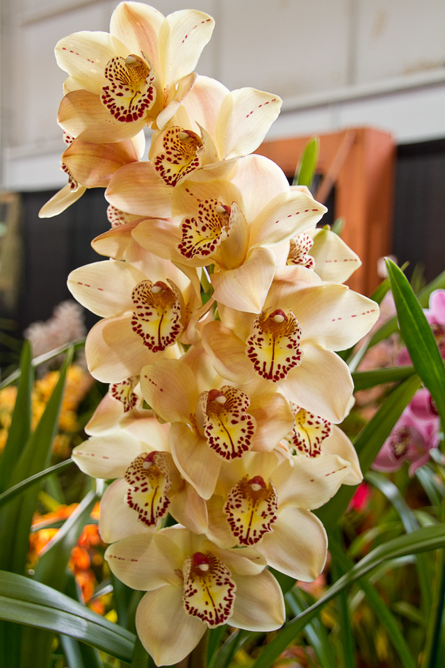 SF_Orchid_Show-12.jpg