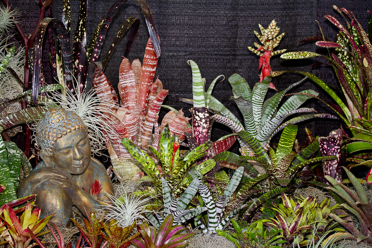 SF_Orchid_Show-28.jpg