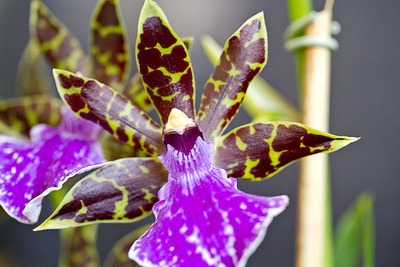SF_Orchid_Show-20.jpg