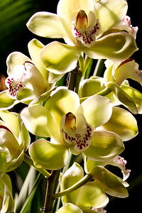 SF_Orchid_Show-10.jpg