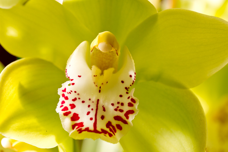 SF_Orchid_Show-14.jpg