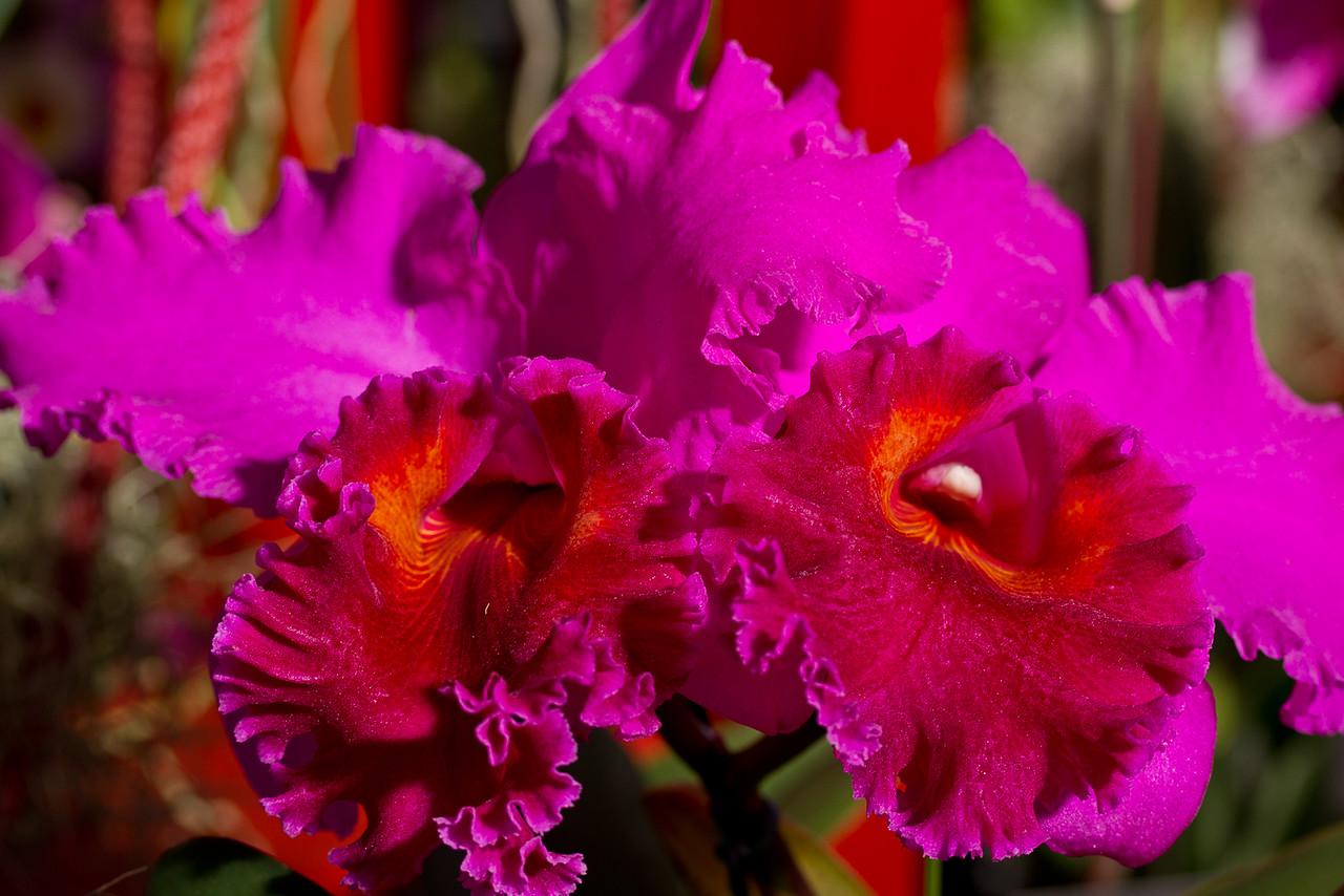 SF_Orchid_Show-38.jpg
