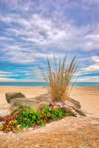 Dune Grass On The Rocks