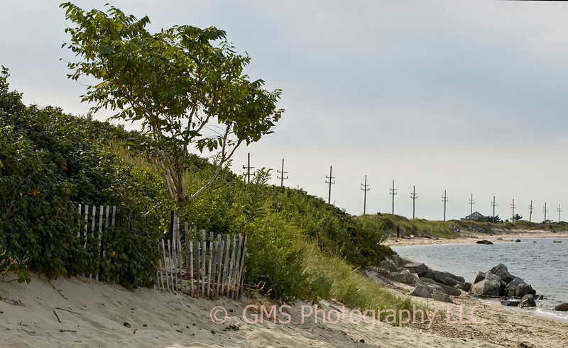 Sandy Hook, NJ:  Lone fenced tree looking south from bay area on Spermaceti Cove.