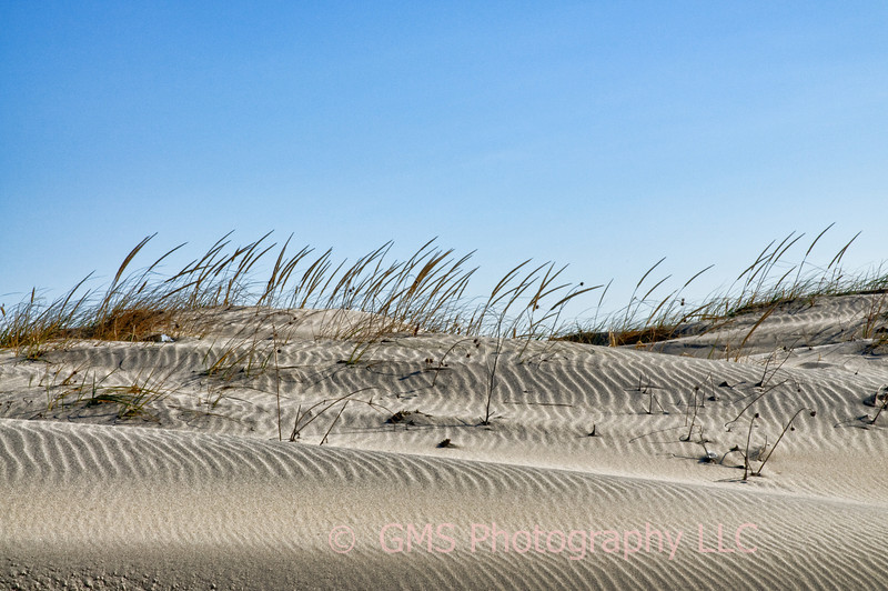 Sandy Hook Dunes