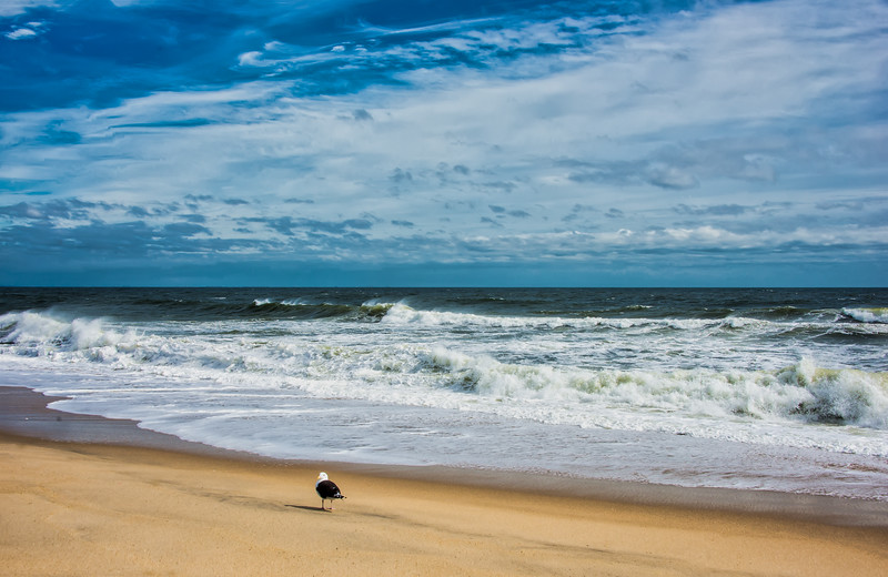 Solitary Seagull At Sandy Hook Surf