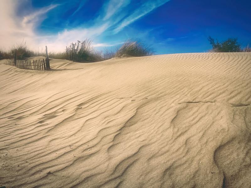 Windswept Sandy Hook Dune