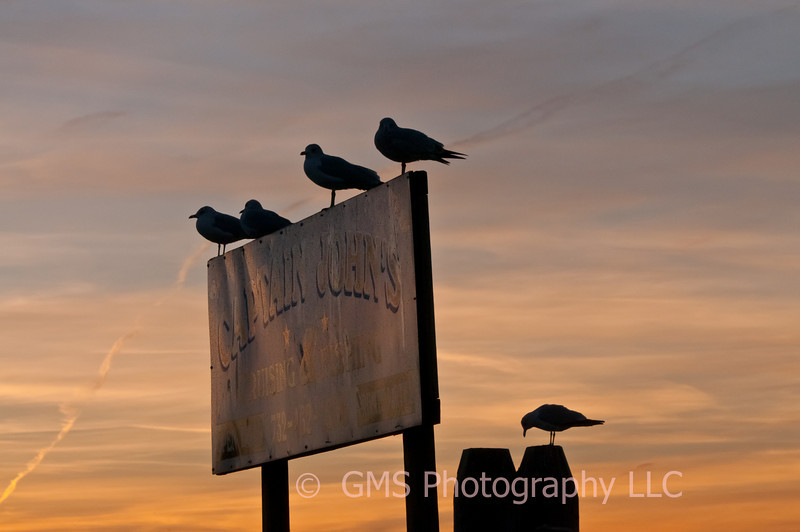 Seagulls in Silouhtte rest on sign at sunset at the Keyport, New Jersey waterfront
