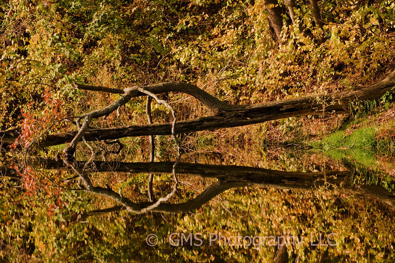 Fall Reflection of fallen tree in lake at Holmdel Park, Holmdel, New Jersey