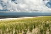 Restoring The Sand Dunes
