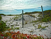 Sand dunes, snowfence and vegetation make for a beautiful shore still life at Isaand Beach State Park in New Jersey