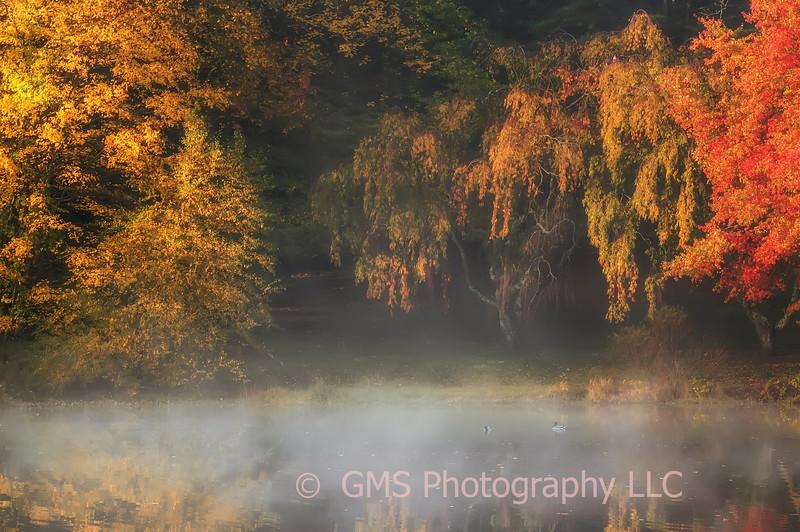 Autumn Morning At The Lake