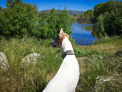 jolee at the lake-