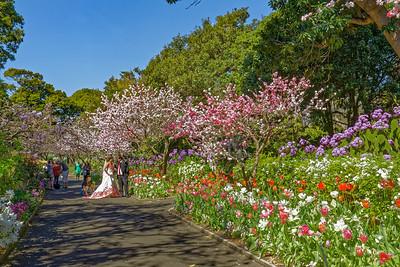 Botanic Gardens 1261