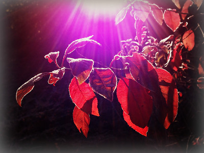 Autumn POW Two