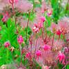 Pink Perennial Texture