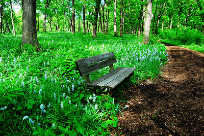 Spring Path & Respite