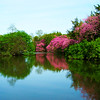 Red Buds on Lake Marmo