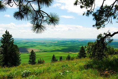 Palouse View from Kamiak Butte