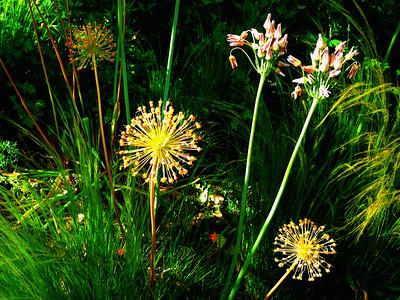 Floral Fireworks!