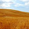 Palouse Wheat Field after Harvest