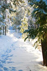 Falling Snow Sparkle