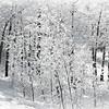 Winter Textures & Lines
