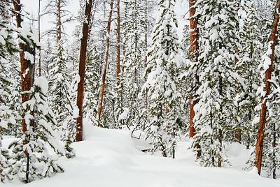 Kewanachee Valley Snowshoe Trail