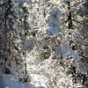 Powdered Snow Coat