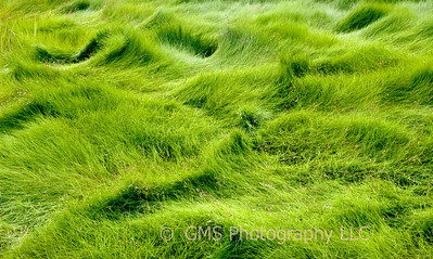 Waves Of Swamp Grass