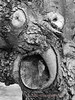 Monster Face In Tree Trunk