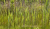 Swamp Grass Pattern