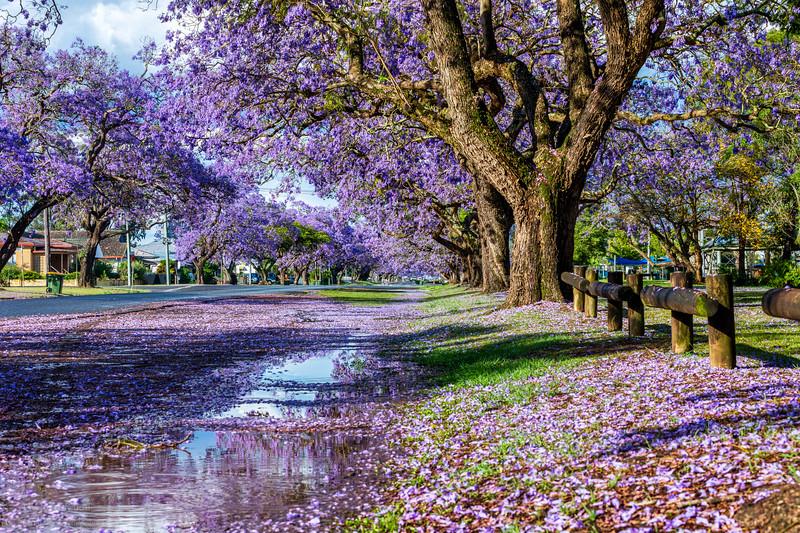 Purple (after the) rain