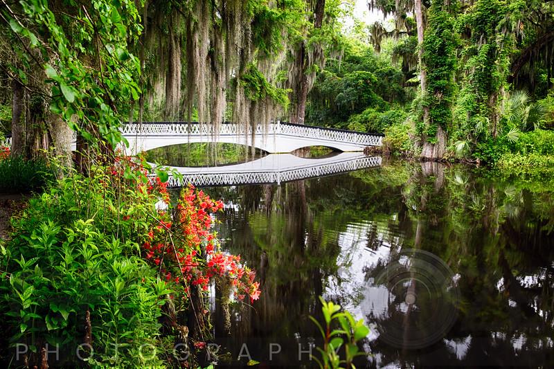 Little White Wooden Footbridge in a Lake, Magnolia Plantation, Charleston, South Carolina, USA