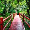 Little Red Footbridge  Over a Pond, Magnolia Plantation, Charleston, South Carolina