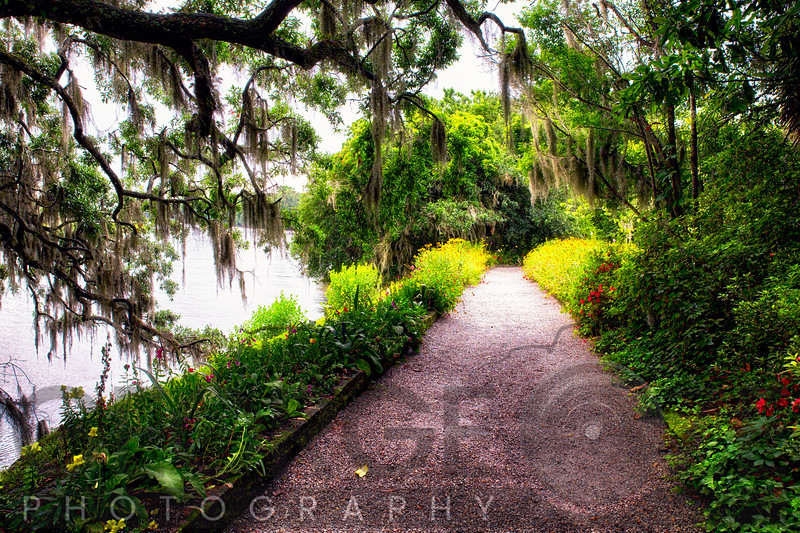 Walking Path Covered with Oak Tree Branches, Magnolia Plantation,, Charelaston, South Carolina