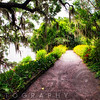 Walking Path Covered with Oak Tree Branches, Magnolia Plantation,, Charelaston, South Carolina