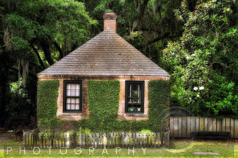 Small Ivy Covered Building Among Thick Swamp Vegetation