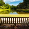 Park Bench with a Pond View