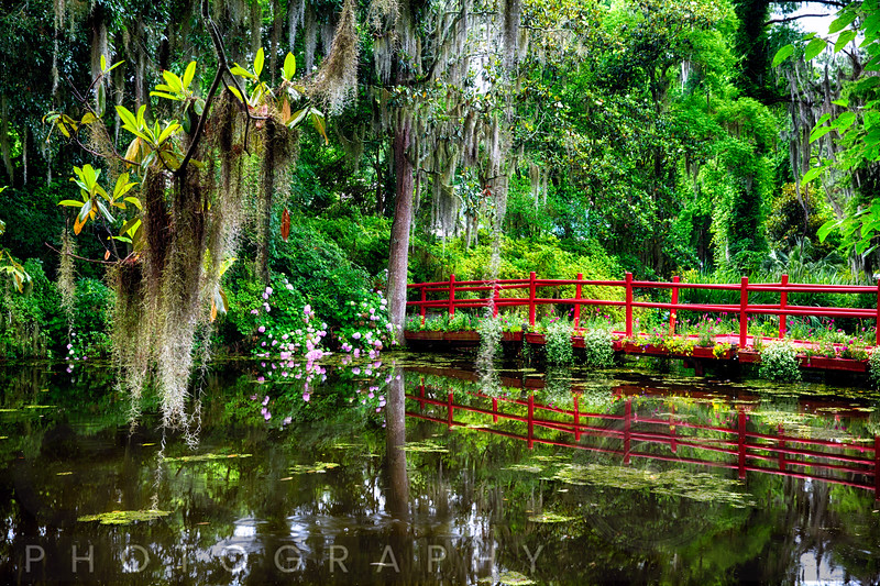 View of a Little Red Footbridge  Over a Pond, Magnolia Plantation, Charleston, South Carolina