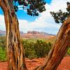 Rocks of Sedona as Viewed Through a Pine Tree, Arizona