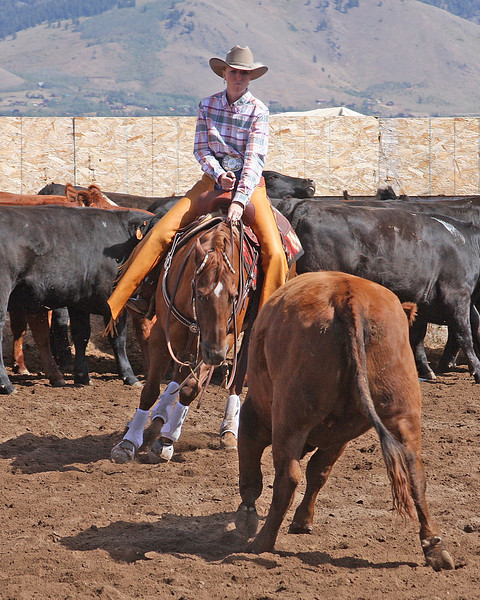 Melissa DeYoung of the DoubleTree Ranch cuts out a cow from the herd at the Meadow Vue (Henry's Lake) Cow Cutting competition on Aug 30, 2008, near Island Park, Idaho.