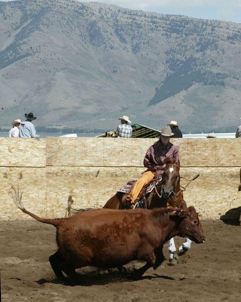 Melissa DeYoung of the DoubleTree Ranch cuts out a cow from the herd at the Meadow Vue (Henry's Lake) Cow Cutting competition on Sept 1, 2007, near Island Park, Idaho.