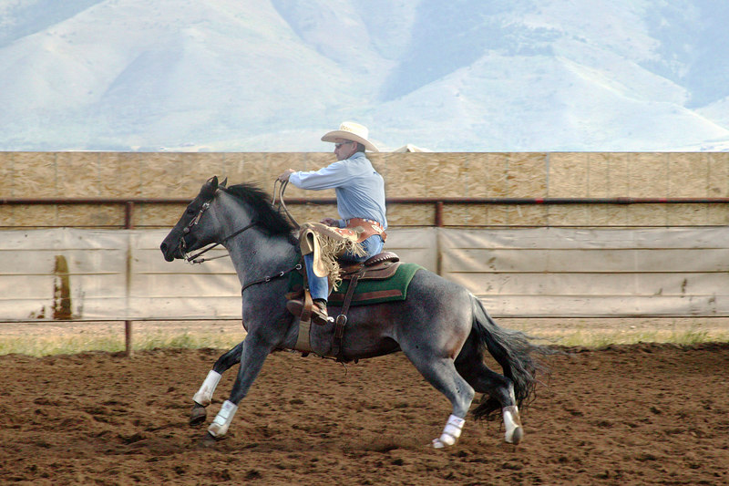 Horse Cutting competition, Meadow Vue Ranch, Henry's Lake,  Idaho Sep 2, 2005,  Print at 8 x 12 size.