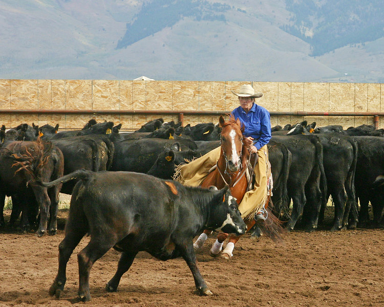Horse Cutting competition, Meadow Vue Ranch, Henry's Lake,  Idaho Sep 2005