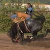 Buckin' Bronco rider stays on horse during rodeo at the Meadow Vue Ranch near Island Park, Idaho on June 21, 2012.
