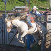 Raring to go out of the gate a horse and bronco rider at first Meadow Vue Ranch Rodeo on June 24, 2009. Island Park, Idaho near Henry's Lake.