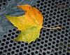 Autumn Leaf On Drain In Bryant Park